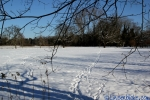 winter-in-langenargen-16