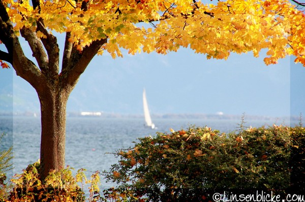 Herbst_Langenargen_Bodensee (2)